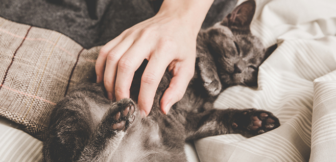 The benefits of allowing pets in your rental property